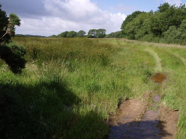Field west of Beaworthy