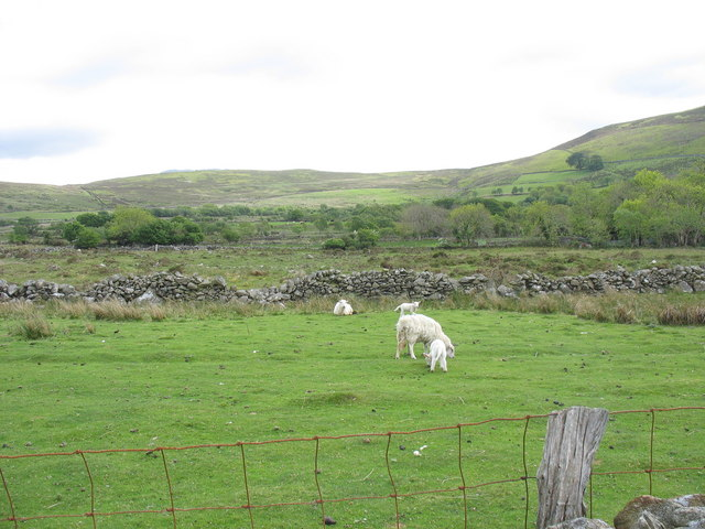 Sheep pasture above Carreg y Gath