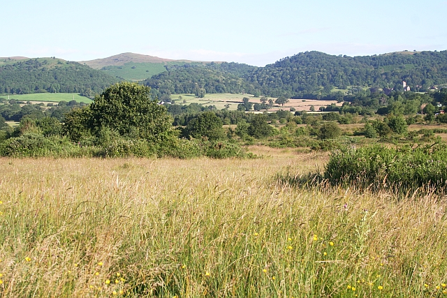 Castlemorton Common