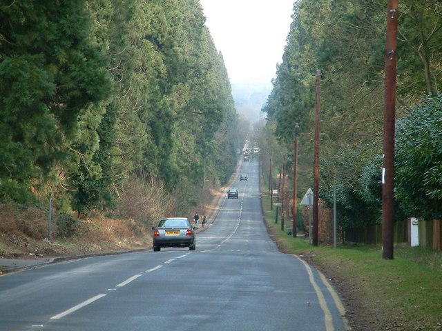 Wellingtonia Avenue, Crowthorne