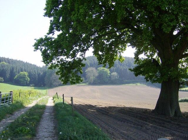 Farmland south of Holway