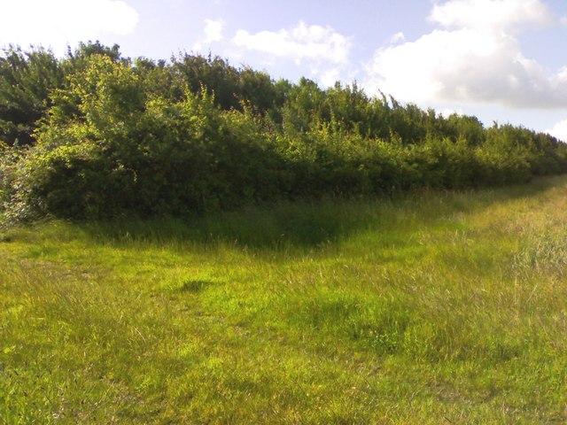 Edge of tree belt