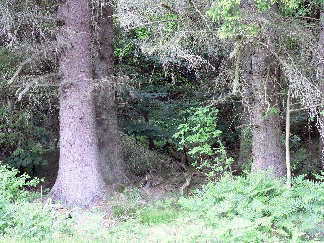 Dense forest below Craigdarroch Hill