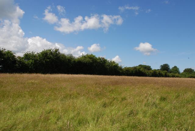 Farmland north of Shaftesbury