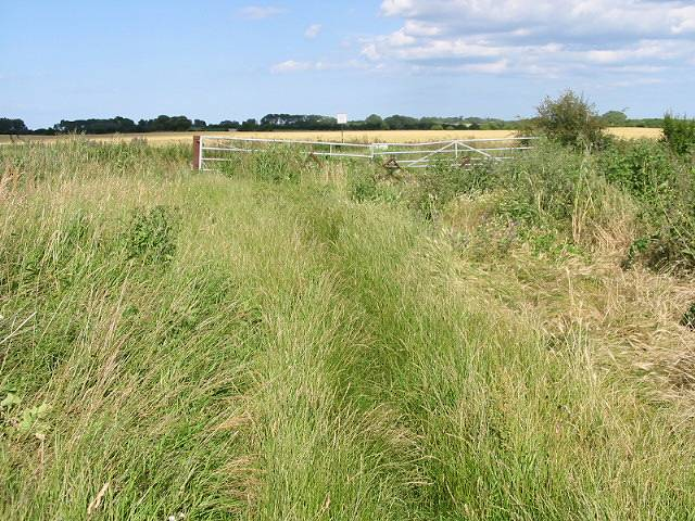 The Wantsum Walk, Chislet Marshes