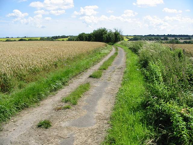Looking S along a farm track near Hoath