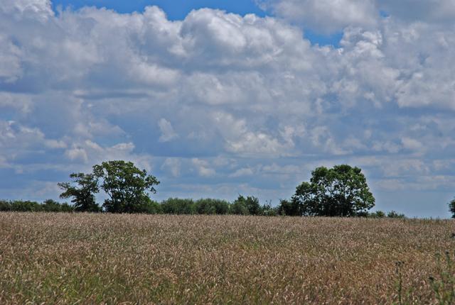 Downland north of Shaftesbury