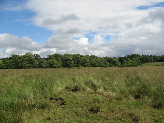 Roebank Woodland