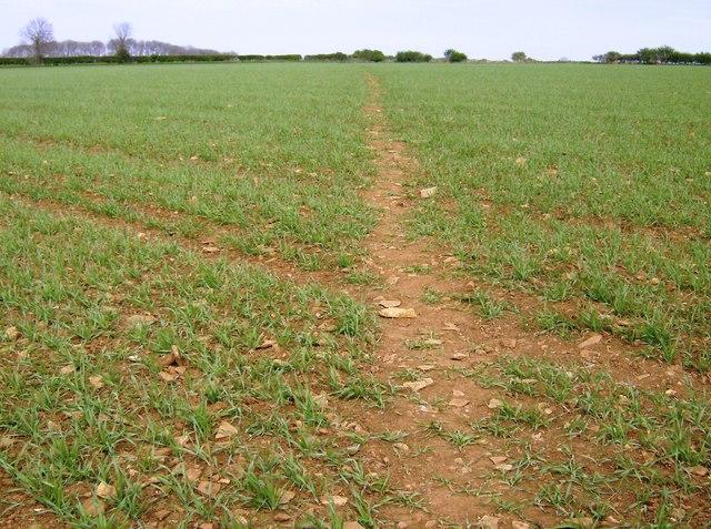 Limestone path from Collyweston to Easton