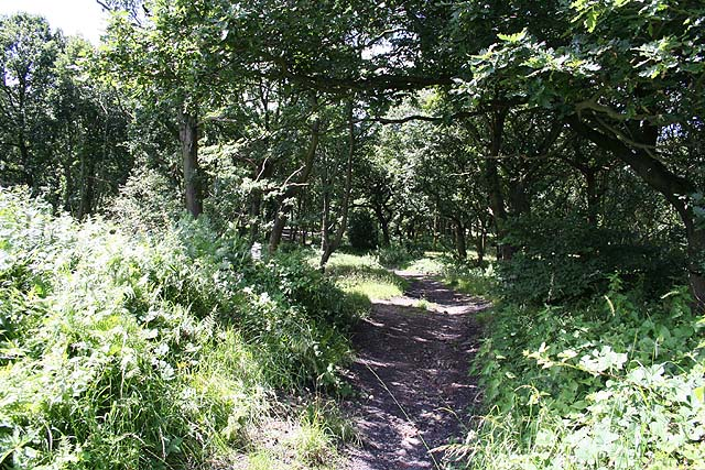Woodland near Kimberworth Park