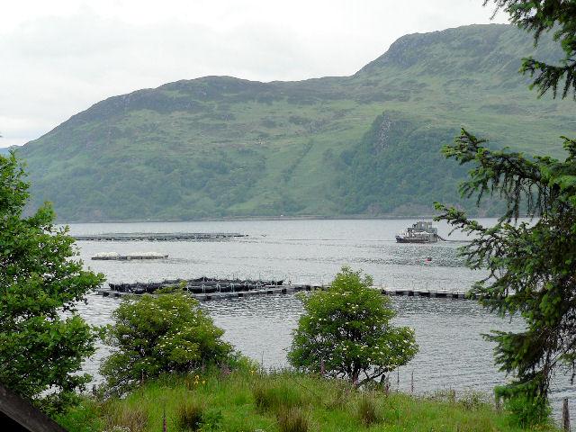Salmon fishery in Loch Duich