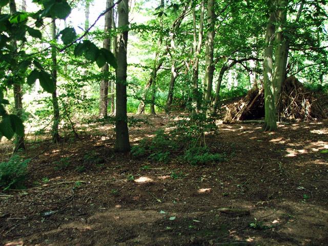 Shelter built in forest