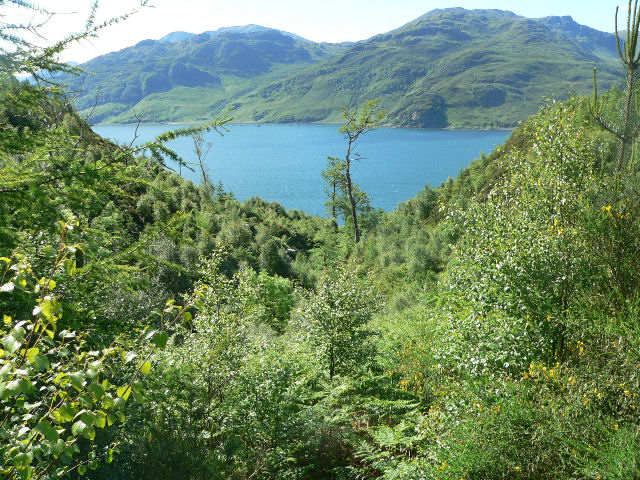 Dip in the woodland giving view across Loch Hourn