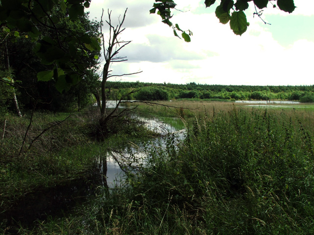 Flooding next to disused railway line