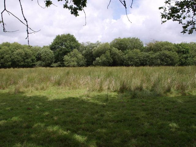 Sedgy field