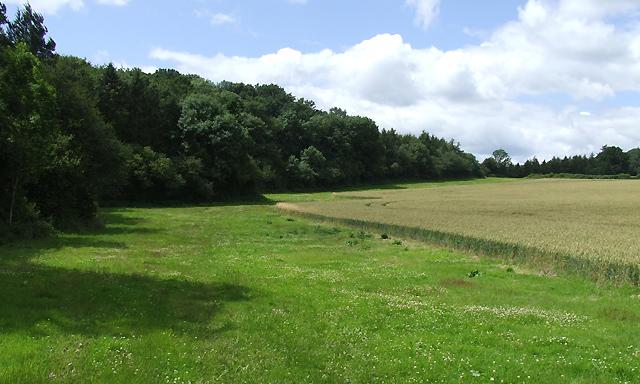 Field-Forest Edge near Spoonhill, Shropshire