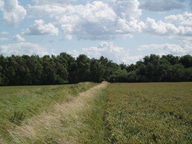 Crowle Moors