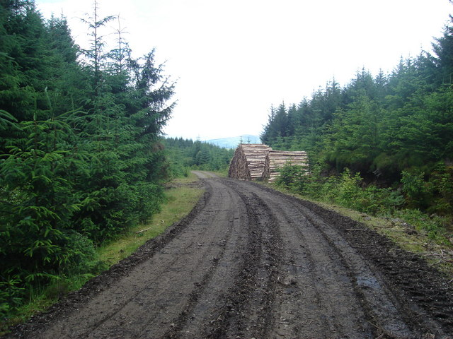 Track in Fearnoch Forest west of Creag Ruisgte