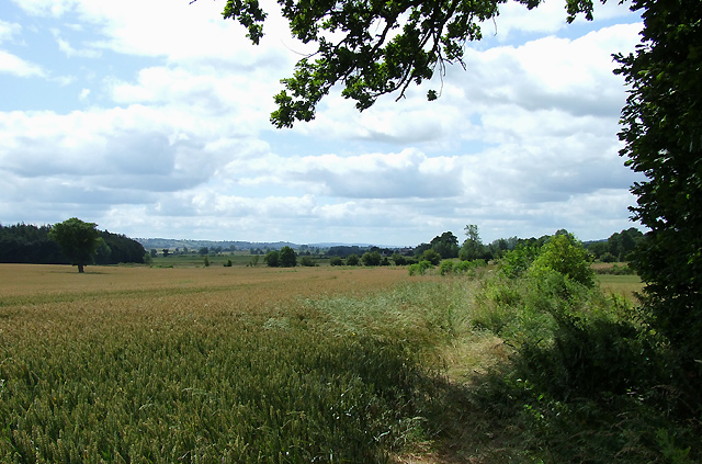 Wheat Field near Bourton, Shropshire