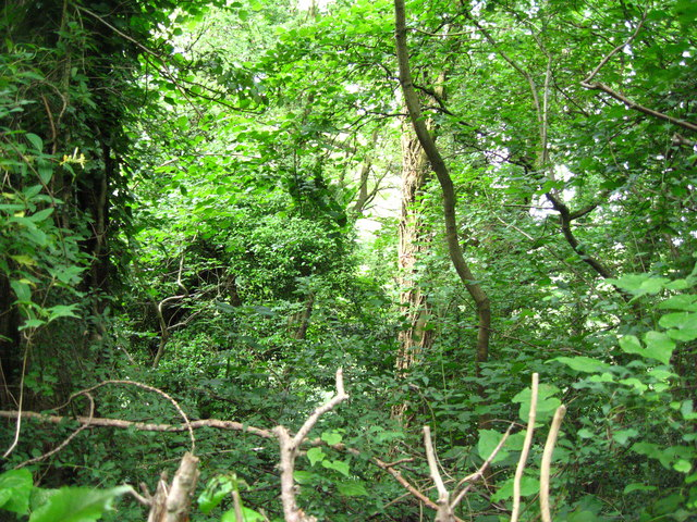 Ancient woodland at Greenmeadow