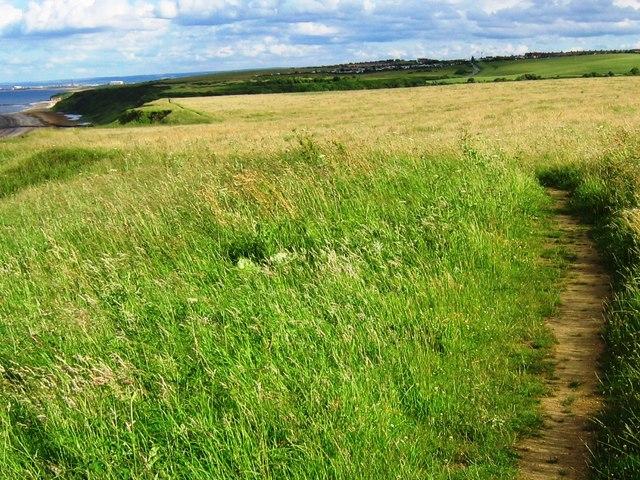 Coastal Grassland near Horden