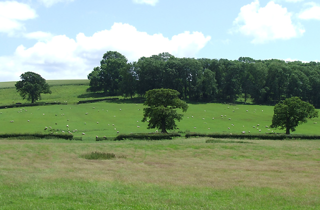 Grazing near Weston, Shropshire