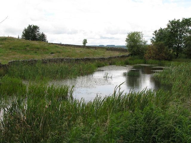 Pond near Hetherington