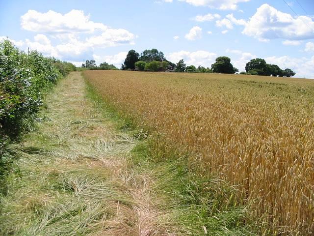 Field margin parallel to Hoath Road