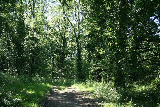 Tawstock: wood near Higher Rolleston