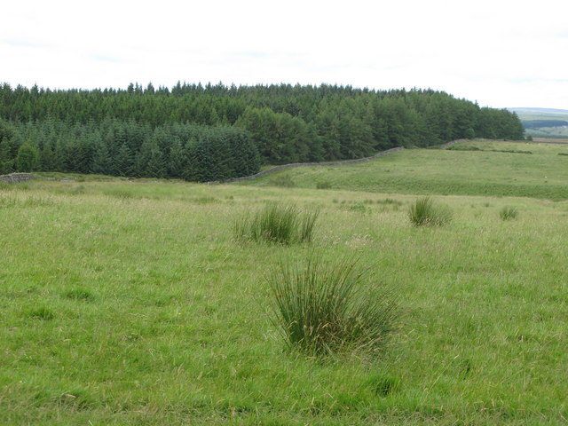 The edge of Wark Forest near Craigshield