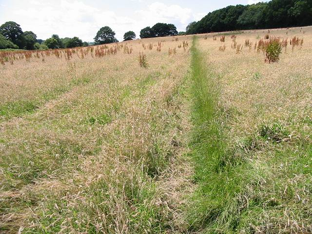 Tracks in the grass towards Crowdown Wood