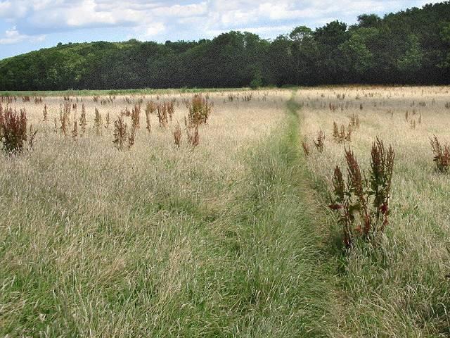 The 'false' path back to Beacon Wood