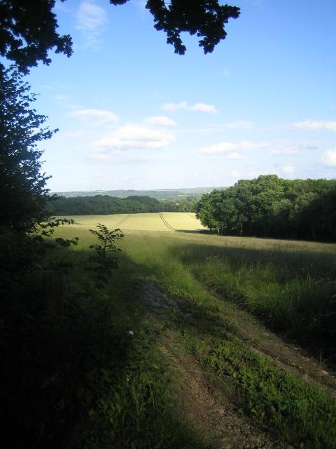 Farmland and woods near Chilmark