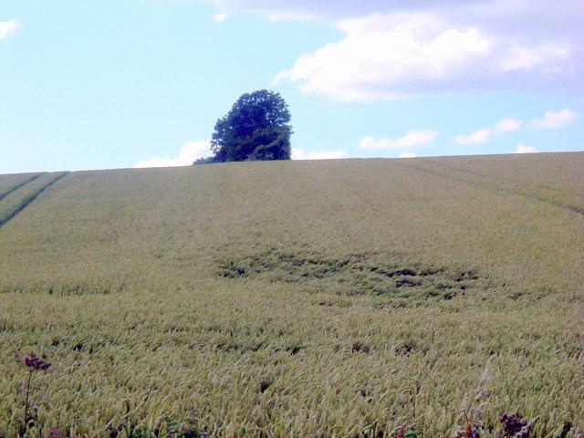 Tree on Lumber hill
