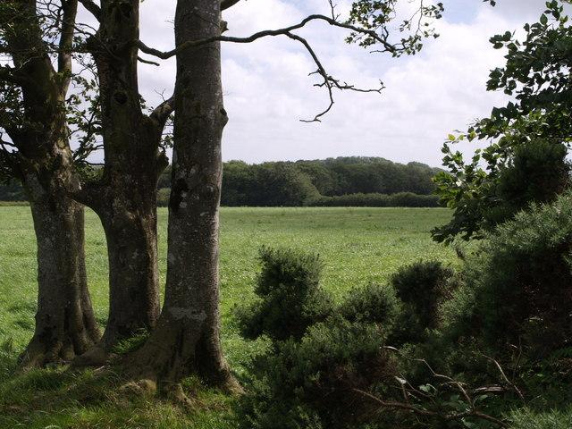 Field near Little Swingdon
