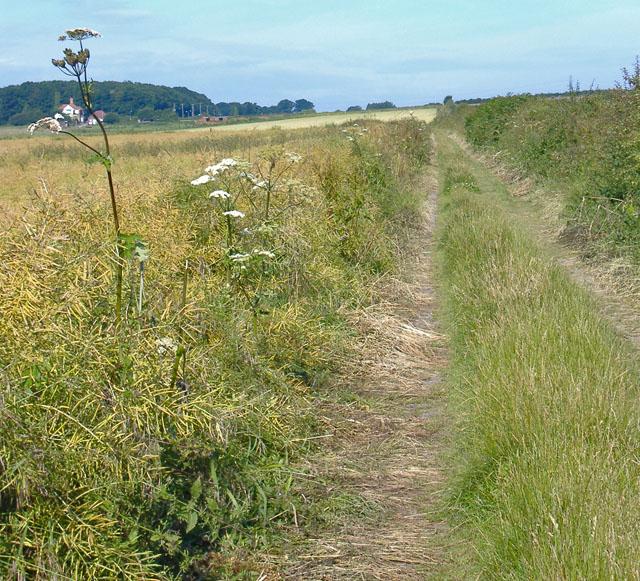 Anlaby-Hessle Bridleway