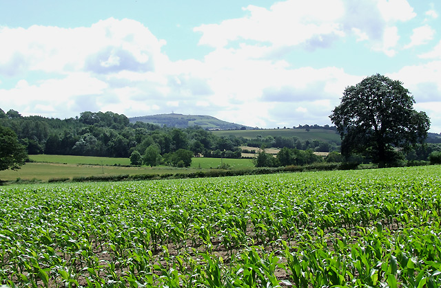 Crop Field, Weston, Shropshire