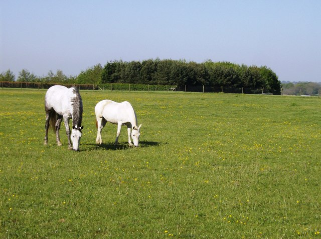 Contented horses