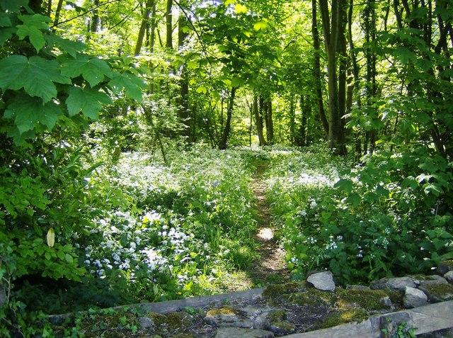 Garlic wood near Chavenage