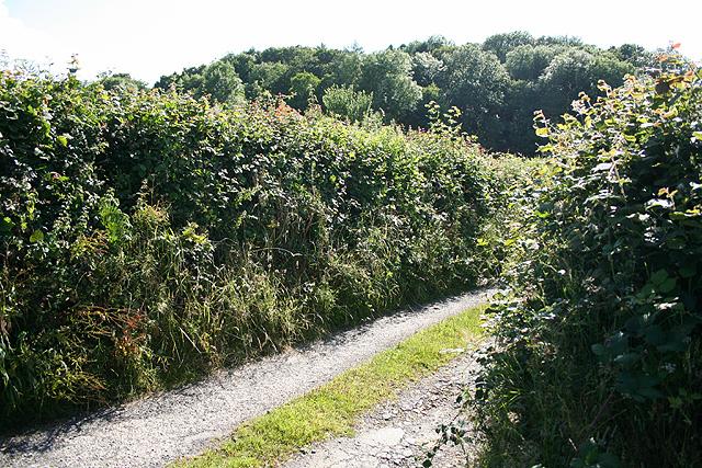 Tawstock: near the site of Hiscott Mine