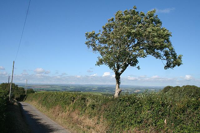Yarnscombe: ash tree