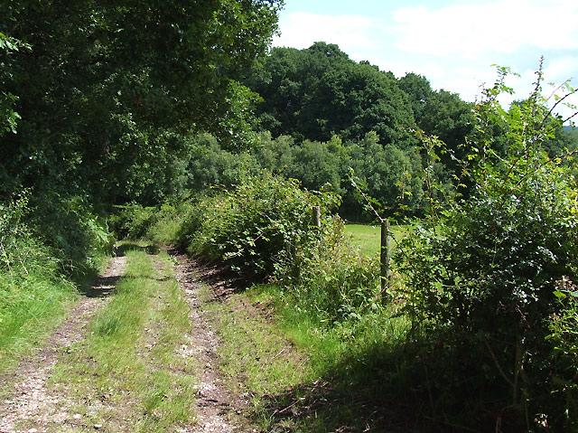 Public Footpath, Spoonhill Wood, Shropshire