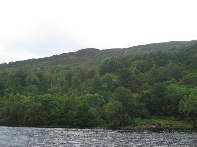 Woodland south of Loch Oich