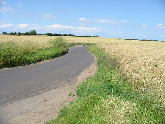Road through the corn fields