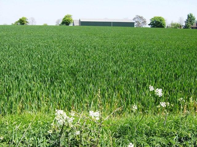 Vancelette's Farm