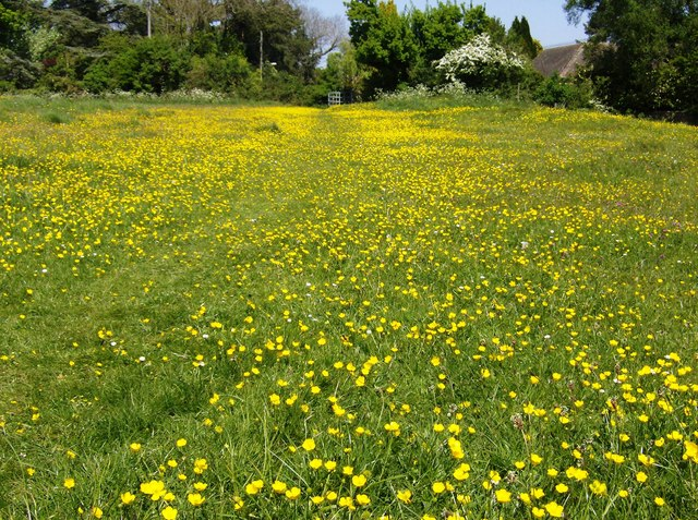 Meadow north of Sherston