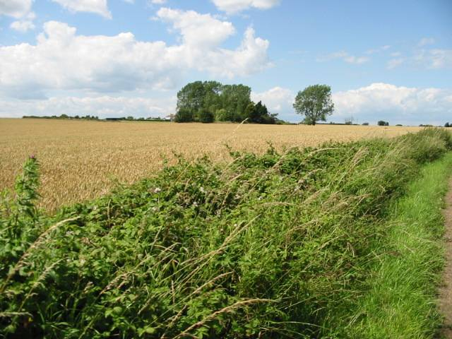 View across farmland near Hoath
