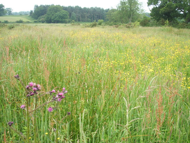 Meadows north of the River Bure on the Blickling Estate