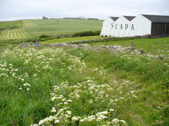 Clifftop Path at Scapa Distillery