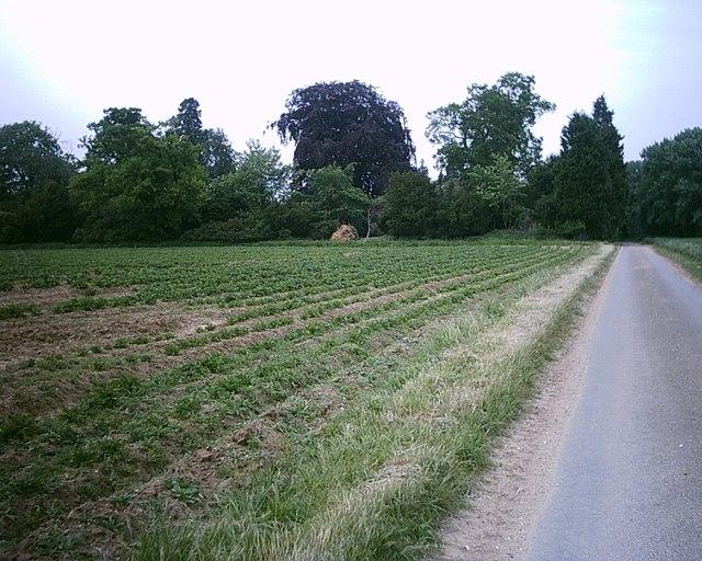 Heath Farm gardens